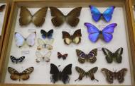 Exposition d'insectes à l'école Marie Navart