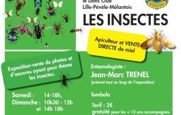 Exposition d'insectes à la mairie-centre.
