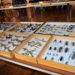 Exposition insectes 2019005