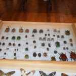 Exposition insectes 2019008