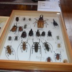 Exposition insectes 2019014