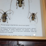 Exposition insectes 2019016