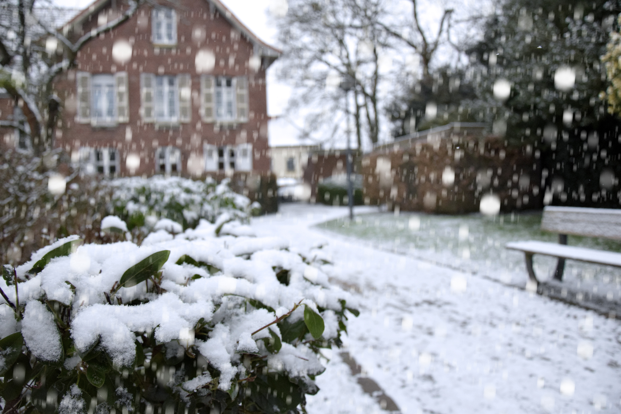 Templeuve-en-Pévèle sous la neige