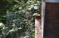 Bientôt du miel communautaire à l'étang d'Huquinville ?
